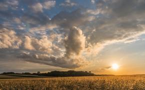 Картинка поле, небо, солнце, облака