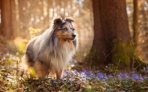 Обои весна, цветы, собака