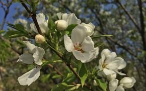 Картинка Цветы, Дерево, Растения, Флора