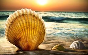 Картинка море, коллаж, ракушка, гребешок