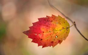 Обои осень, лист, краски, багрянец