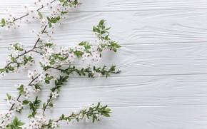 Картинка Цветы, весна, Ветки, цветение