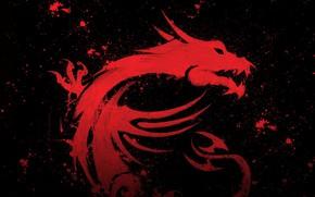 Обои micro star international, MSI, dragon