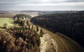 Картинка лес, пейзаж, природа