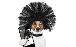 Картинка взгляд, морда, креатив, фотография, лапа, юмор, прическа, белый фон, ошейник, снимок, смартфон, Джек-рассел-терьер