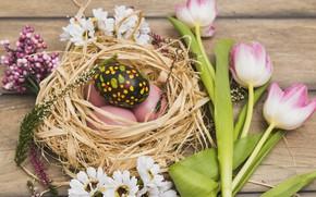 Картинка Цветы, Тюльпаны, Пасха, Яйца, Гнездо