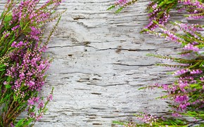 Картинка фон, растение, древесина