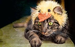 Картинка кошка, кот, взгляд, морда, поза, серый, фон, модель, шапка, темный, портрет, обработка, лапы, маска, лежит, …