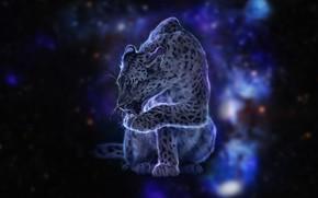Картинка кошка, космос, звезды, леопард, окрас