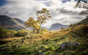 Картинка горы, природа, дерево