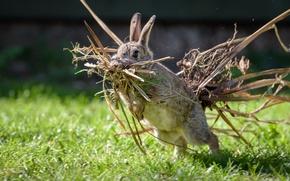 Картинка трава, ситуация, кролик, гнездование