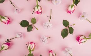 Картинка цветы, фон, розы, весна, бутоны, pink, flowers, background, spring, roses