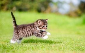 Обои прыжок, котенок, малыш