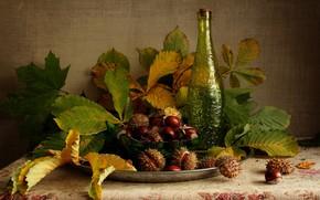 Картинка листья, бутылка, покрывало, плоды, миска, натюрморт, блюдо, каштаны
