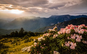 Картинка пейзаж, закат, цветы, горы, природа, куст