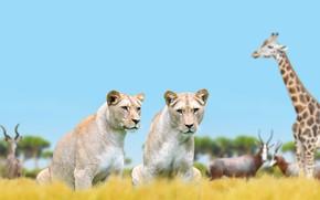 Картинка животные, природа, жираф, львицы
