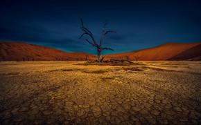 Картинка небо, трещины, дерево, земля, пустыня, засуха