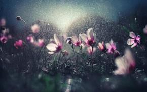 Картинка капли, цветы, блики, дождь, боке, полив