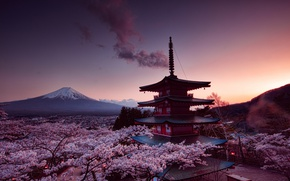 Картинка вечер, сакура, Japan, Fuji, Senso-ji Temle, пагода храма Сенсо-дзи