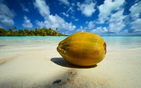 Картинка море, пляж, природа, пальмы, побережье, голубое небо