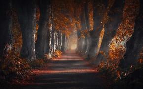 Обои природа, осень, деревья, дорога