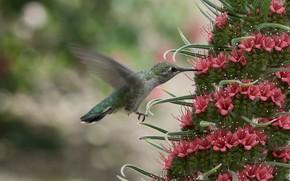 Картинка цветок, нектар, колибри, птичка, боке
