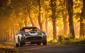 Обои Ferrari, деревья, дорога, SWB, свет, 250GT