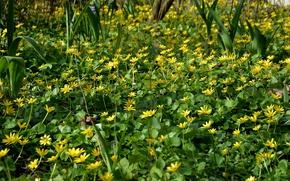 Картинка Поле, Трава, Весна, Nature, Grass, Spring, Цветение, Field, Flowering