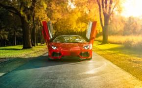 Обои sunrise, red, Lamborghini, supercar, trees, car, road, natural light