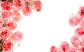 Обои розы, pink, flowers, roses, розовые розы