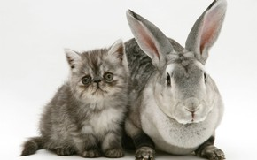 Картинка котенок, кролик, серые