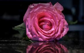 Картинка цветок, вода, макро, отражение, фон, розовая, темный, роза, лепестки, бутон, одна