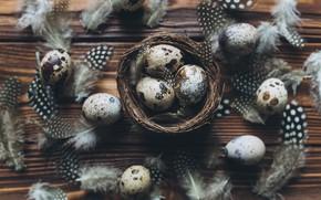 Картинка яйца, перья, Пасха, wood, spring, Easter, eggs, decoration, Happy, перепелиные