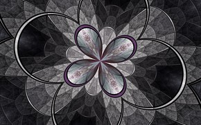Обои цветок, линии, фрактал, узор, дуга