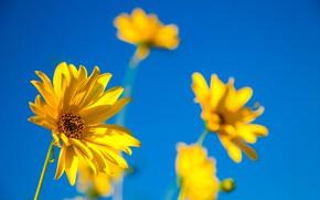 Картинка Цветы, Yellow flowers, Жёлтые цветочки
