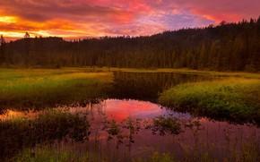 Картинка лес, закат, река, Tore H