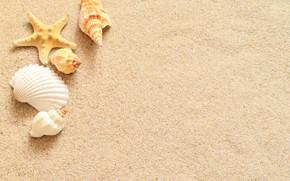 Картинка песок, звезда, ракушки, sand, starfish, seashells
