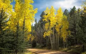 Картинка дорога, осень, лес, Колорадо, США, Аспен