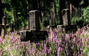 Картинка цветы, кресты, кладбище