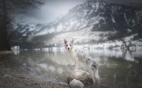 Картинка горы, река, камни, собака