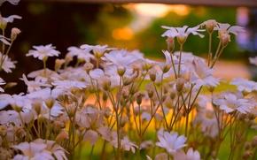Картинка Весна, Цветочки, Flowers, Spring, Ясколка