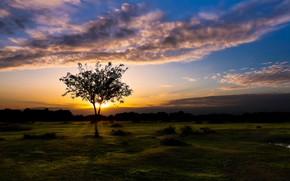 Картинка закат, Англия, Fritham