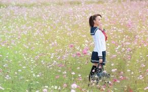 Картинка поле, девушка, цветы, форма, 十三 葉