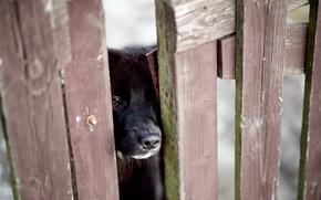 Обои грусть, забор, собака