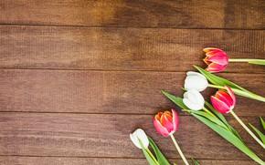 Картинка цветы, букет, colorful, тюльпаны, red, white, wood, flowers, tulips, spring