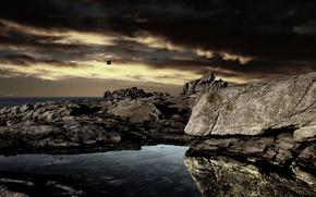 Картинка море, ночь, скалы, птица