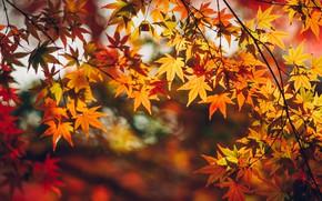 Обои листья, осень, ветки