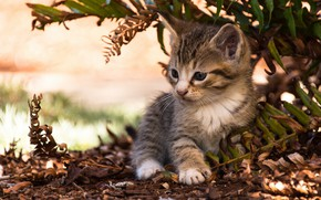 Обои котёнок, малыш, листья