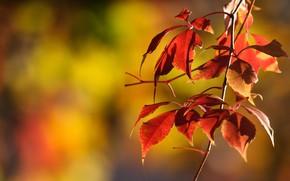 Обои листья, осень, ветка, дерево