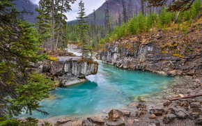 Картинка лес, деревья, река, скалы, Канада, Canada, British Columbia, Британская Колумбия, Канадские Скалистые горы, Canadian Rockies, …